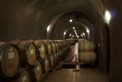 Wine storage facility at Acacia Cellars with hundreds of barrels of wine