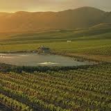 Vineyards in Healdsburg California
