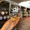 Glass of white wine at Treasure Island Wines