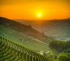 Vineyards on the slope of a hill at sunset