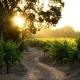 dirt road in the vineyard